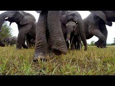 Elefanten finden eine GoPro › Dravens Tales from the Crypt