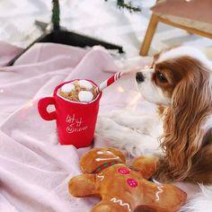 Cavalier King Charles Spaniel puppy love via @leerachel Instagram
