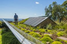 RICS unveils guide to green roofs and walls | FM Magazine