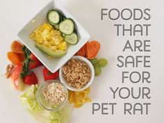 Here are foods your pet rat can safely eat.