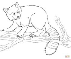 Red Panda on Tree coloring page Free Printable Coloring Pages Panda Coloring Pages, Lego Coloring Pages, Paw Patrol Coloring Pages, Fish Coloring Page, Dragon Coloring Page, Pokemon Coloring Pages, Online Coloring Pages, Free Printable Coloring Pages, Coloring Pages For Kids