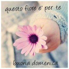 Che La Vita Continua: Buona Domenica con il Cuore Art Of Beauty, Good Mood, Yves Rocher, Night, Anna, Flowers, Cards, Frases, Photos