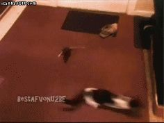 tom and jerry gif | Real Life Tom and Jerry...