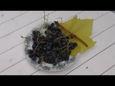 Beskärning av vindruvor i trädgården - YouTube