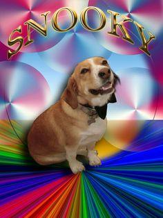 SNOOKY !!! Il cane di Valter&Sandra Elaborazione di foto con Photoshop By Laura Giordanengo