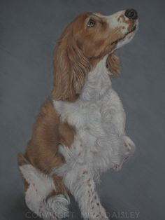 'Treats'. Springer Spaniel in pastel. For Sale, please contact me.
