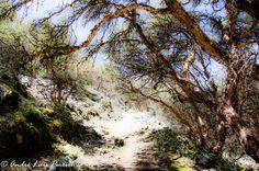 Caminho para a Laguna Llaca, Huaraz, Peru