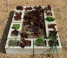 Cinder block garden box