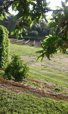 22 de abril de 2015. Extremadura. España. Almendros, naranjos, viñas, olivos y cipreses. El paraiso terrenal.