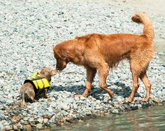 {the big and the little} by Soggydan, via Flickr - life jacket! ♥