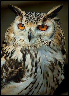 This wallpaper is shared to you via ZEDGE Owl Photos, Owl Pictures, Owl Bird, Pet Birds, Realistic Owl Tattoo, Buho Tattoo, Eurasian Eagle Owl, Spiritual Animal, Screech Owl
