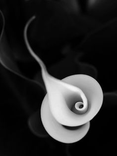 Calla Lily spiral..................