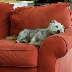 Jasper's taking it easy. Take It Easy, Puppy Love, Puppies, Throw Pillows, Dogs, Cute, Animals, Cubs, Cushions