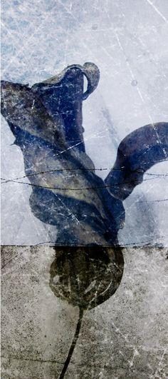 Päivi Hintsanen: From the Garden XI, 2011