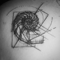 Fibonacci Spiral lines added to shell and Nautilus