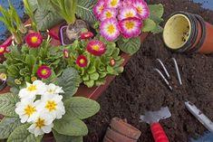 10 φυτά που μπορείτε εύκολα να μεγαλώσετε στον κήπο σας