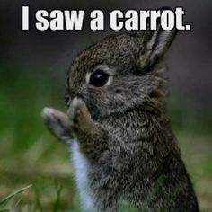 Bunnies never lie