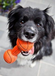 Border Collie - needless to say, he was playful! www.pupparazzi.com.au