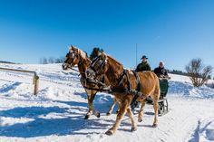 #Pferdeschlitten fahren im #Mühlviertel. Alle Infos und Angebote zu #Winterreiten und #Pferdeschlitten unter www.muehlviertel.at/winterreiten ©Tourismusverband Mühlviertler Alm/Hawlan