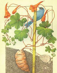 Tubero di Ysano e Diglossa Glauca (Ande Settentriolali)