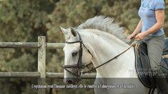L'équitation rend l'homme meilleur, elle le conduit à l'abnégation et à l'humilité.