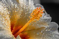Explore daumy's photos on Flickr. daumy has uploaded 25882 photos to Flickr.