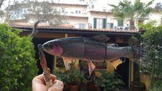 Rainbow trout swimbait.