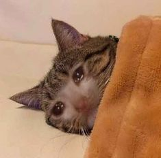 i dont want to inconvenience the body clean up crew - depression_memes Sad Cat Meme, Cat And Dog Memes, Cute Cat Memes, Cute Animal Memes, Cute Funny Animals, Cute Cats, Funny Cats, Funny Memes, Crying Meme