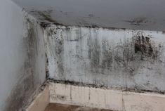 Comment éliminer les moisissures qui envahissent la maisonnoté 3.2 - 59 votes Dans les maisons mal isolées ou soumises à l'humidité, des moisissures peuvent se développer très rapidement sur les murs et sur le plafond. Non seulement ces taches sont inesthétiques mais elles sont en plus néfastes pour la santé et peuvent nuire à votre … More