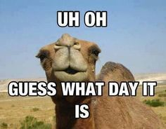 Funny pictures about Must be hump day. Oh, and cool pics about Must be hump day. Also, Must be hump day. Funny Meme Pictures, Funny Quotes, Funny Memes, Jokes, Humor Quotes, Pet Quotes, It's Funny, Animal Quotes, Quotable Quotes