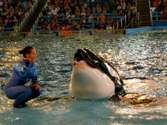 Unna, at SeaWorld Texas, has been in captivity for 19 years. She was born in captivity. * SeaWorld's Orcas Have Been Held Captive For A Combined 437 Years
