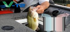 Keeping Fish Alive When Live-Well Fails