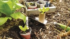 Why plant your seedlings in plastic when you can make your own origami pots that go straight in the ground?
