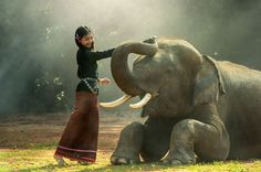 Ako vas je zanimalo: Ovako izgleda kad se slonu vadi zub! VIDEO
