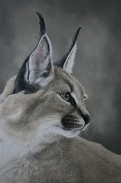 "Caracal study by clive64 on DeviantArt. 17"" x 11"" oil on board study of a Caracal"