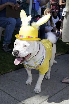 I'm not a pittie, I'm a bunny. HAPPY EARLY EASTER RP BY LINDA HAMMERSCHMID