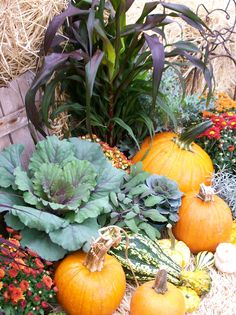 A lovely display of all things fall from Olson's Garden Center in Wareham on Cape Cod.