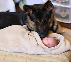 GSD this child has a friend and protector for life