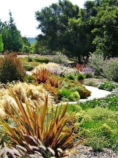 Nz Native Garden New Zealand _ Nz Native Garden - Modern Garden Design, Garden Landscape Design, Steep Gardens, Plants, Natural Garden, Landscape Design, Native Garden, Dream Garden, Garden Planning