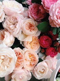 Shades of pink - garden roses
