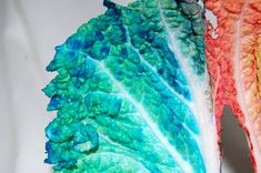 Kindergarten xylem water movement demonstation with napa cabbage and dyed water - 4 Science Week, Science For Kids, Science Projects, Kid Experiments At Home, Water Movement, Napa Cabbage, Breath In Breath Out, Food Coloring, Kindergarten