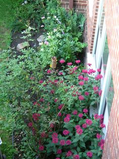Overhead view - bee balm, rose bush (getting ready for second blooming) cone flower, lilies, globe thistle, liatrus, daisies....