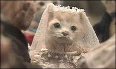 Kitten Wedding - Walter Potter Taxidermy