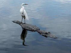 13 животных, которые доказали, что размер не имеет значения (ФОТО)