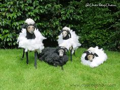 Baaa! Dogs in fancy dress - Italian Greyhounds dressed as sheep for a fancy dress dog show.