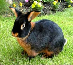 Beautiful coloring on this bunny!