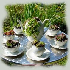 sweet on a small table in the garden with only one teapot and 2 tea cups . - Garden Care, Garden Design and Gardening Supplies Succulents In Containers, Cacti And Succulents, Planting Succulents, Succulent Planters, Little Gardens, Small Gardens, Garden Care, Amazing Gardens, Beautiful Gardens