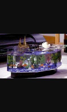 unconventional fish tank ideas | large oval coffee table aquarium