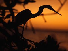 Bird photography in the everglades - spectacular - but watch out for the snakes, aligators, and mosquitos.