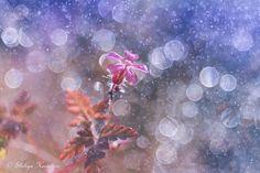 Photograph Miss Spring by Shihya Kowatari on 500px